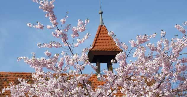 Rathaus-im-Frühling