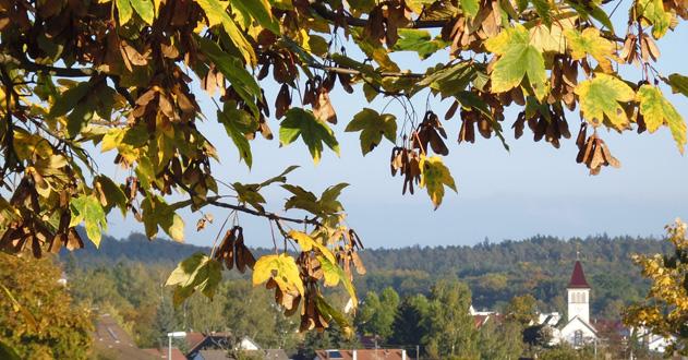 Dettenhausen Ortsansicht Herbstmotiv