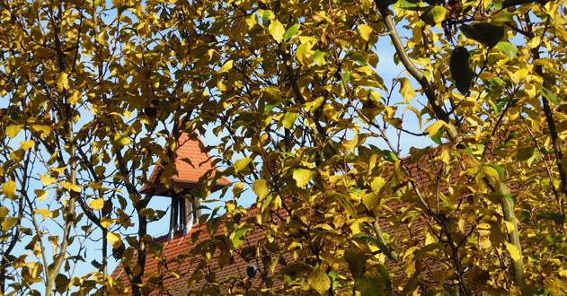 Herbstmotiv Rathaus