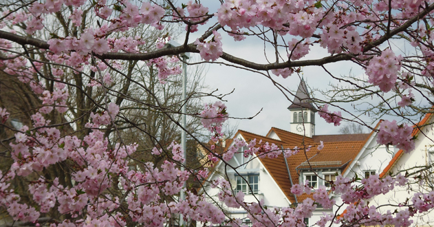 Kirschblüten mit Ortskern