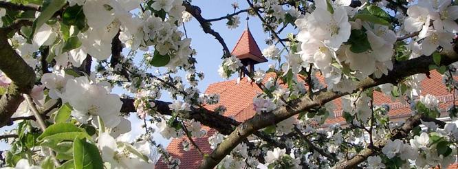 Rathaus im Mai