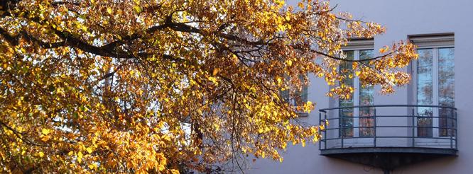 Rathausansicht im Herbst