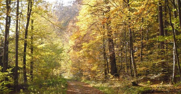 Herbstwald Fritz-Emmel-Weg
