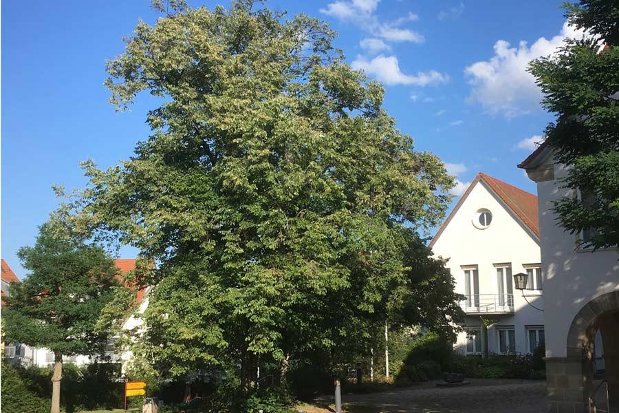 Rathaus Linde