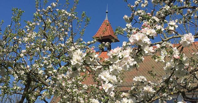 Rathaus mit Blütenbaum